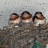 Thumbnail image for This Is For The Birds